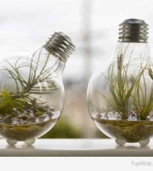 useful_apartment_plants_1