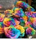 rainbow_rose_2