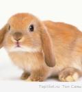Самая лучшая клетка для кролика