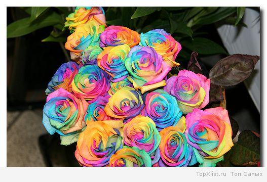 Самые дорогие цветы какие
