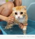 лучший способ вымыть кошку