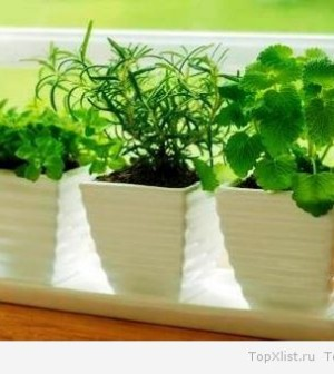 Что выращивать на подоконнике?