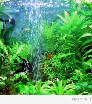 Выбираем компрессор для аквариума