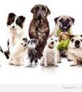 Корм для щенков и собак