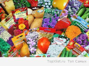 Где покупать семена?