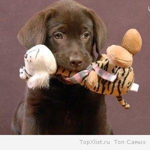 обучить собаку