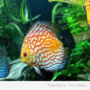 аквариумные рыбки +и аквариумы