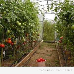 продукты сельского хозяйства