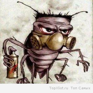 вывести тараканов